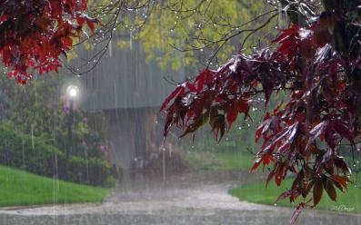 nature-landscapes_hdwallpaper_cold-fall-rain_3772
